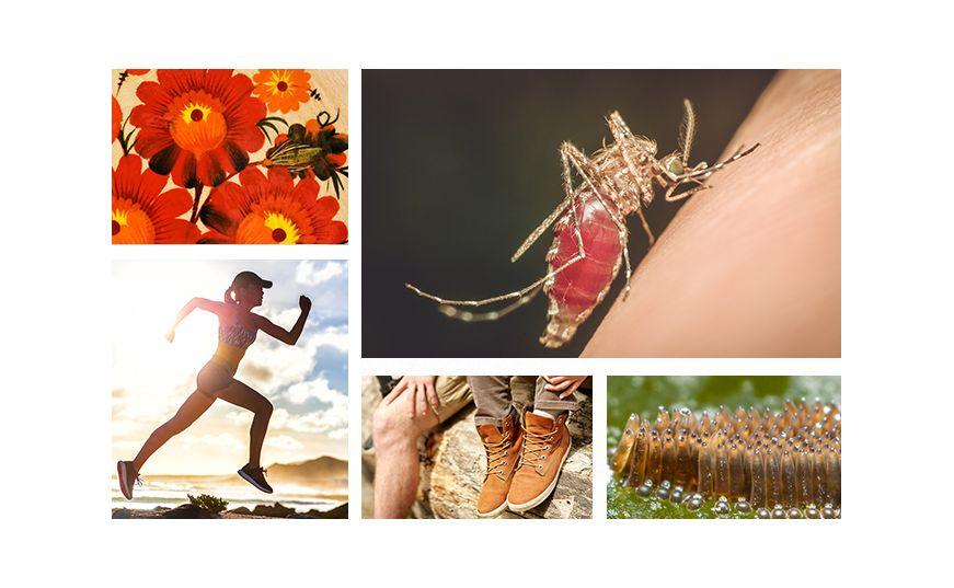 Убийтсвенные существа: 10 безумных фактов о комарах
