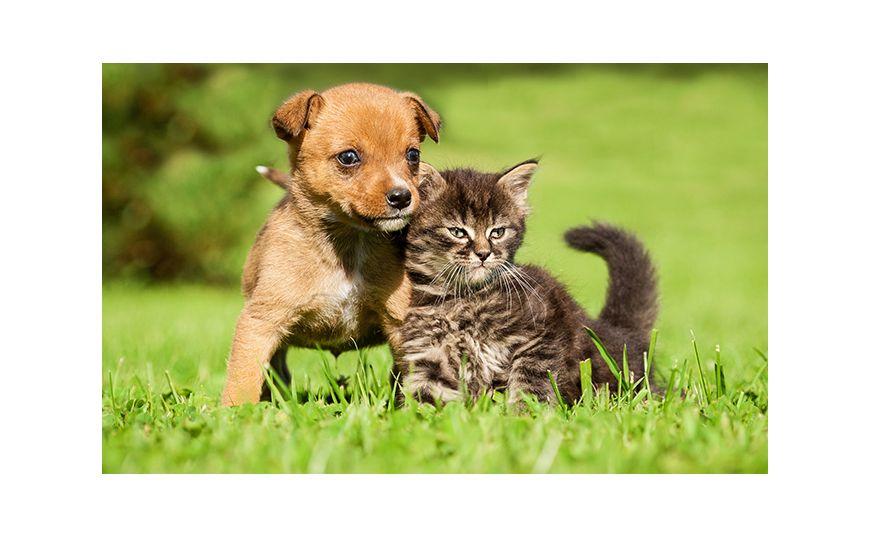 Защита от комаров для собак и кошек